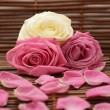 Pink and white roses and rose petals — Stock Photo