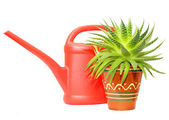 Watering can and green plant — Stock Photo