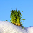 Green grass, white snow and blue sky — Stock Photo