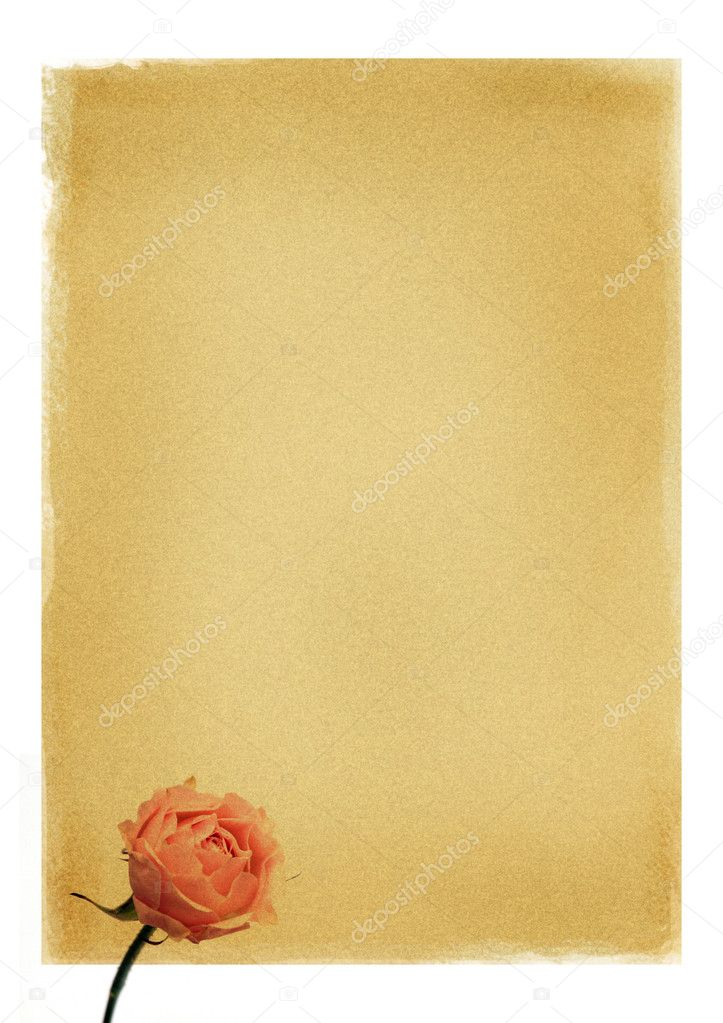 Paper for congratulation or invitation with rose — Stock Photo #1830763