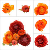 Orange flowers isolated — Stock Photo