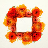 Frame of the bright orange flowers — Stock Photo
