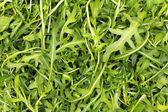 Background of fresh green arugula leaves — Stock Photo