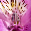 The macro exotic flowers - Stock Photo