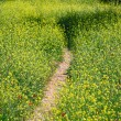 Field path — Stock Photo