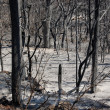 Burned forest — Stock Photo #1845525