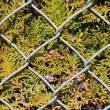 Foto Stock: Wire metal fence and fir tree texture