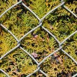 Wire metal fence and fir tree texture — Stock Photo