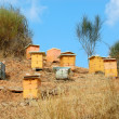 Foto Stock: Wooden beehives