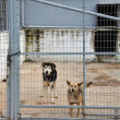 Stock Photo: Caged dogs