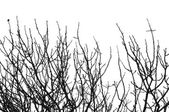Leafless tree branches — Stock Photo
