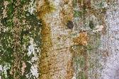Moss wall — Stock Photo
