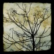 Foto Stock: Tree branches silhouette