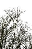 Arbres à feuilles caduques — Photo