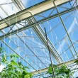 Greenhouse - Stock Photo