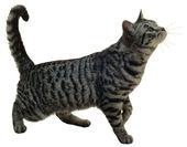 Katze — Stockfoto