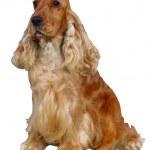 Dog — Stock Photo #1747225