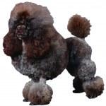 Dog — Stock Photo #1747395