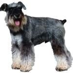 Dog — Stock Photo #1747412