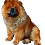 Dog — Stock Photo #1747425