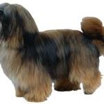 Dog — Stock Photo #1747433