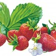 Vector red strawberry — Stock Vector