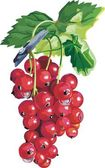 Vector red currant. Ripe berry — Stock Vector