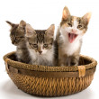 Royalty-Free Stock Photo: Kittens