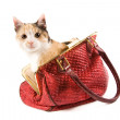 Cute kitten in a red bag — Stock Photo