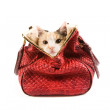 Stock Photo: Cute kitten in red bag