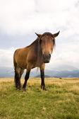 Sad horse — Stock Photo