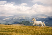 White horse — Stock Photo