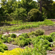 Vegetable garden — Stock Photo