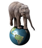Elephant and Earth — Stock Photo