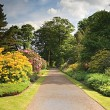 Garden Path — Stock Photo #1635627