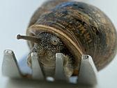 Snail dinner — Stock Photo