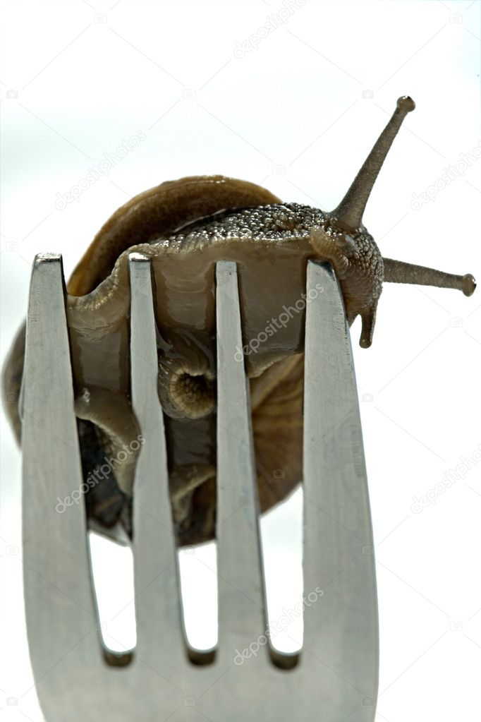 A snail crawling on the end of a fork — Stock Photo #1635741
