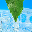 Leaf and ice — Stock Photo