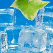 Ivy leaf and ice — Stock Photo