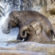 Stock Photo: Elephant shower
