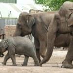 Elephant family — Stock Photo #1697071