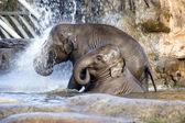 Elephant shower — Stock Photo