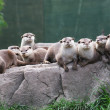 Otter family — Stock Photo #1733940