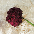Stock Photo: Withered rose