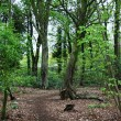 Foto Stock: Woodland path