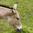 Donkey — Stock Photo #1736852