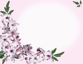 Background pink flowers — Stock Photo