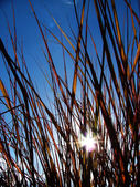 The sun through grass — Stock Photo