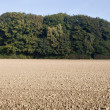 Ploughed field — Stock Photo #1740318