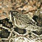 Snake — Stock Photo #1740549